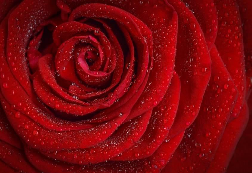 Изненада букет от рози